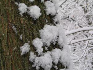 Snowbark 1 2-03