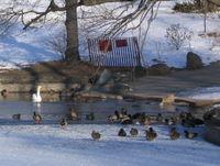 Unfrozen lake patch 2-05