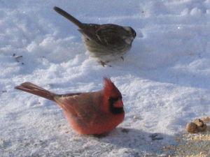 Cardinal 2-05