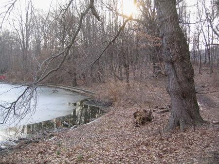 Brown lakeside 2-11