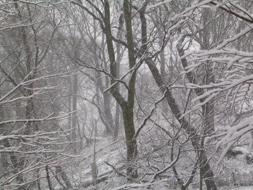 Snow woods 2-03