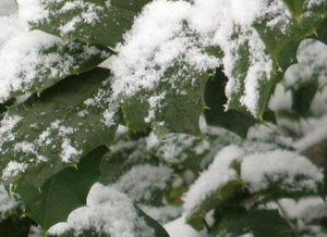 Snowleaf 2 2-03