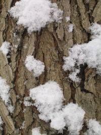 Snowbark 2 2-03