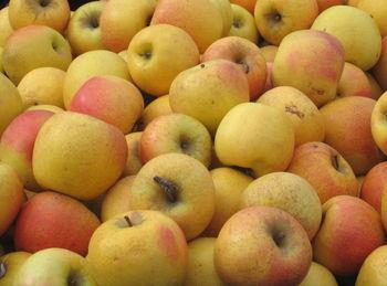 Apples 2-14