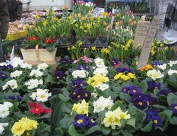 Greenmarket flowers 2-14