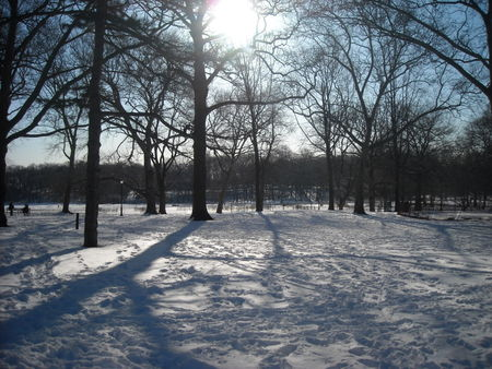 Snowy morning