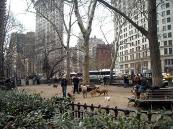 MadSqPark dog run 3-10
