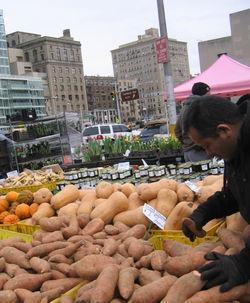 Sweet potato perspective 2-14