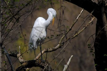 MR egret