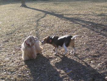 Spaniel&beagle 2-2-5