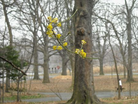 Yellow branch grey day 3-26