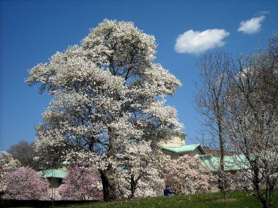 Magnolia Plaza ls 4-09