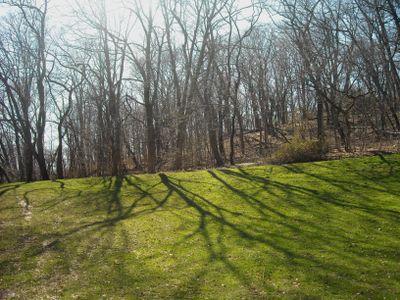 Tree shadows 3-31