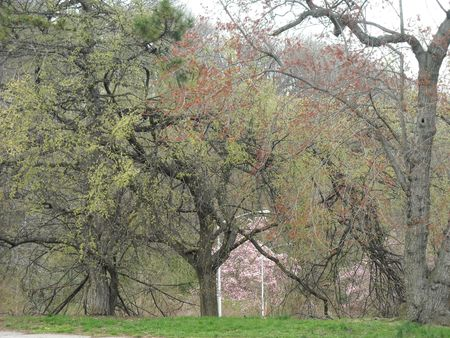 Cloudy day woods 4-15