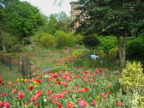Litchfield villa garden 1