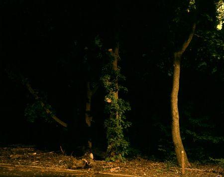 Night park 1