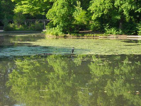 Heron lake 5-20