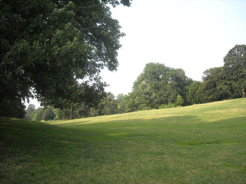 Pure lawn 7-22