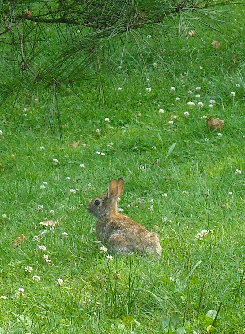 Bunny 7-22