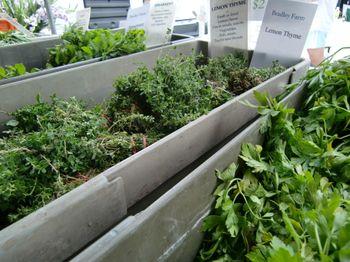 GM herbs 8-22