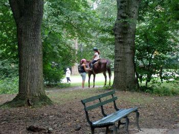 Horse rider 8-25