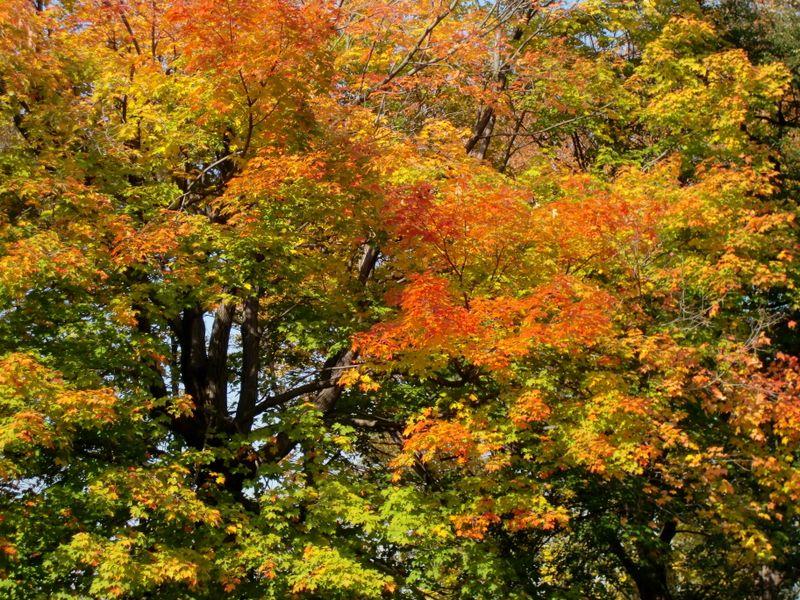 Autumn palette 10-21
