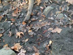 Mud grille 11-18