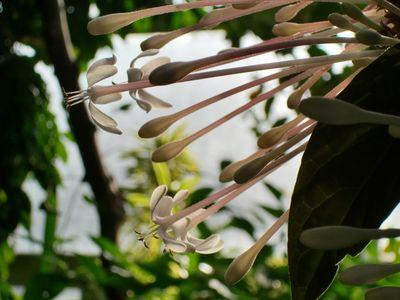 Bbg white flowers 1-16