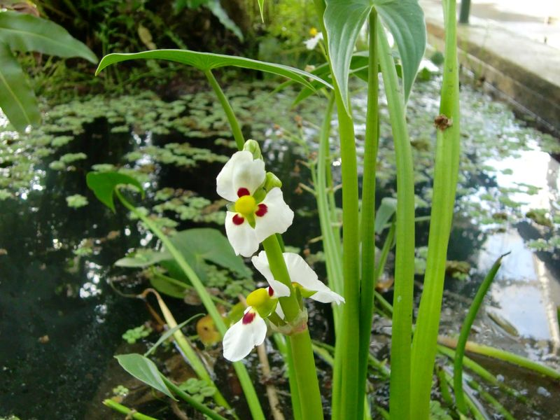 Bbg water garden 1-16