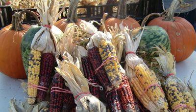 Harvest 11-21
