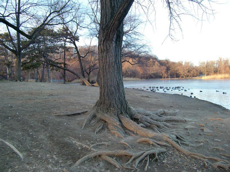 Lakeside tree 1-6