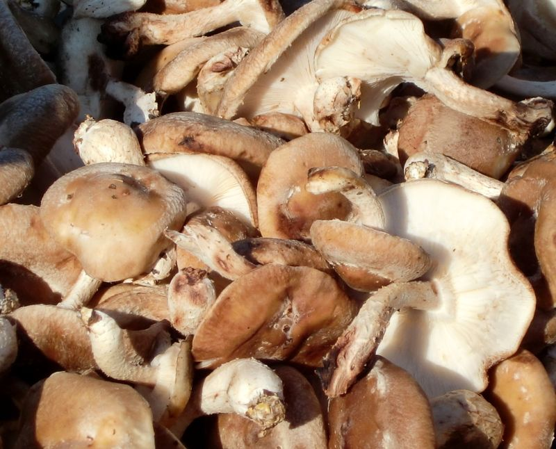 Mushrooms 1-16