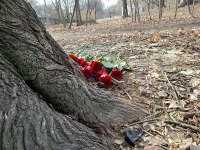 Tree roses 1-22