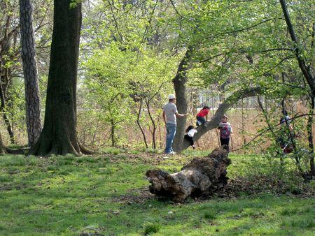 Treeplay