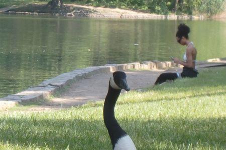 Goose n girl 5-26