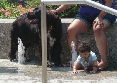BPL newfie fountain