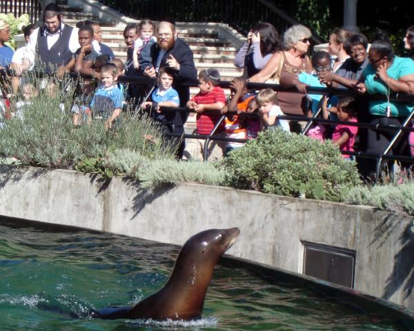 PPZoo sea lions 8-27