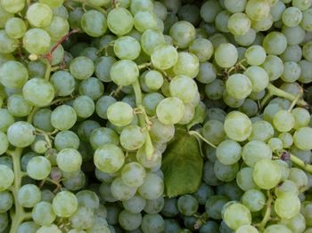 Green grapes 9-4-10