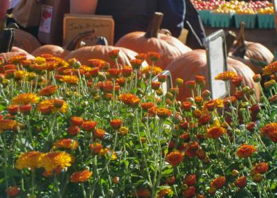 Mums&pumpkins 10-9-10