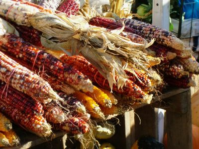 Corns 10-9-10