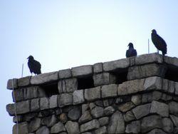 Mystery birds