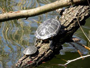 Turtles 4-4-10