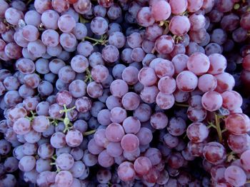 Red grapes 9-4-10