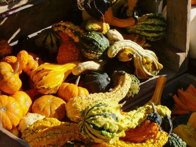 Gourds 10-9-10