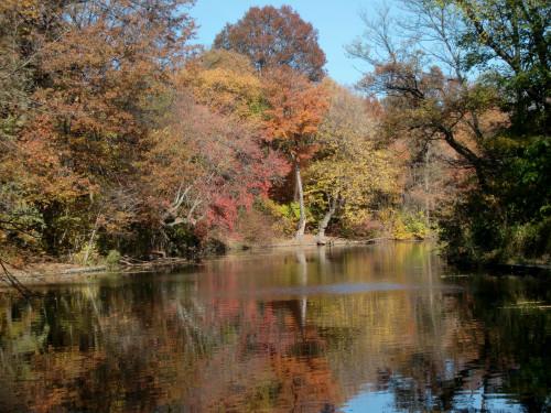 Autumn lake reflection 11-11-10