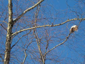 Snowcapped nest 1-13