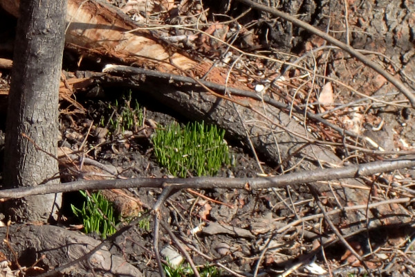 Greening ground
