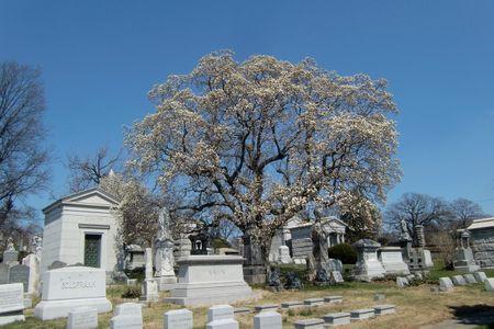Salem fields magnolia 4-6-11