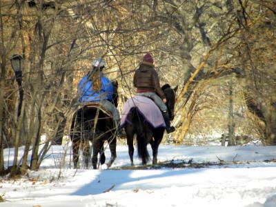 Horses in snow 12-28-10