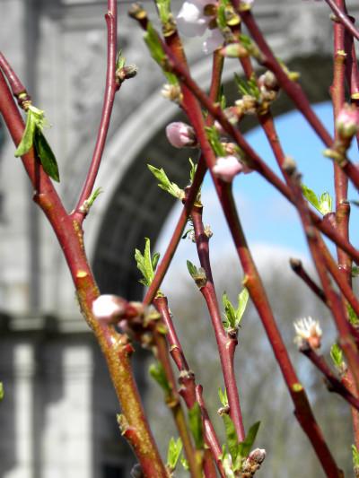 Branches at GAP 3-19